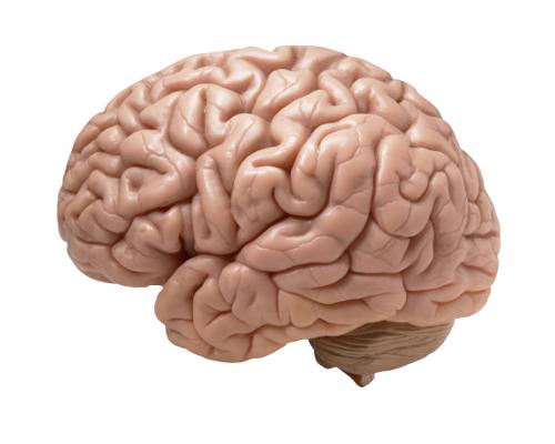 Ellenáll a gyógyszereknek az emberi agy