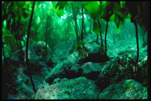 Egészség a tengerek mélyéről, spirulina alga segítségével