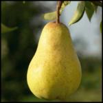 Fogyókúrás étrend kiegészítők helyett zsírégető gyümölcsök